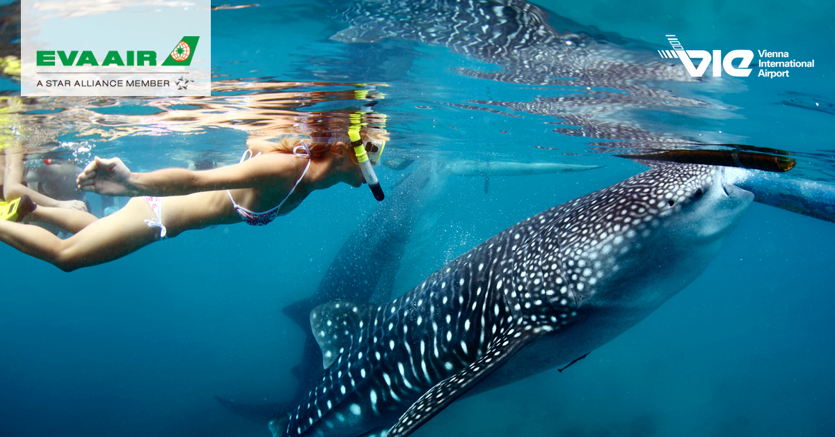 Cebu - miesto, kde sa skamarátiš so žralokom veľrybím
